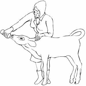 Woman Feeding Calf coloring page