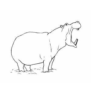 Angry Hippo coloring page
