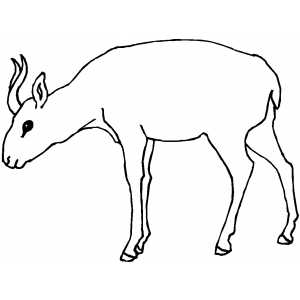 Antelope With Small Horns coloring page