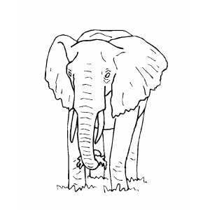 Big Eating Elephant coloring page