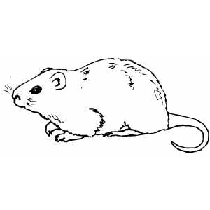 Coypu coloring page