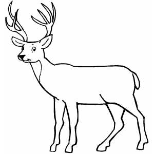 deer looking at you coloring page