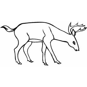 Drinking Deer coloring page