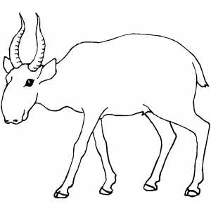 Inviting Antelope coloring page