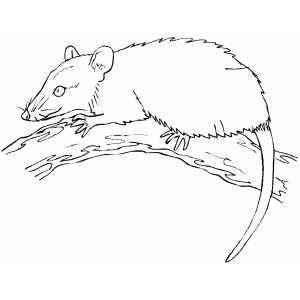 Mouse On The Tree coloring page