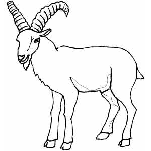 Old Goat coloring page