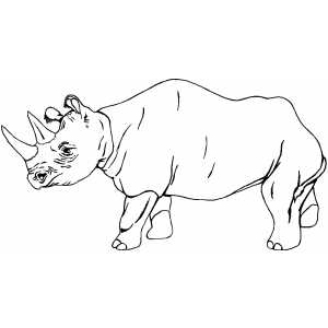 Free coloring pages of baby rhinoceros | Animal coloring pages ... | 300x300