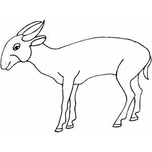 Pygmy Antelope coloring page