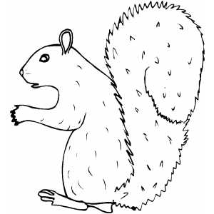 Scared Squirrel coloring page
