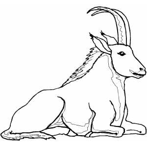 Sitting Ibex coloring page