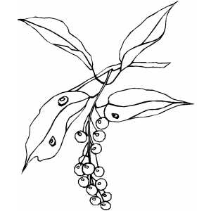 Berries On Branch With Water Drops coloring page