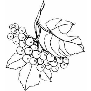 Branch And Berries coloring page