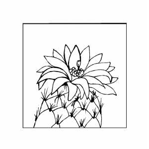 Cactus With Big Flower coloring page