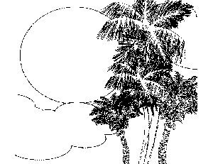 Caribbean Trees Coloring Page