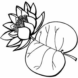 Flower With Big Leaf coloring page