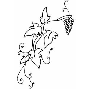 Grapevine coloring page
