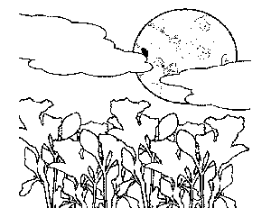 Moonlight Flowers Coloring Page