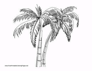Palms coloring page