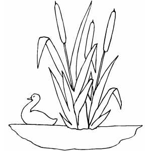 Reeds coloring page