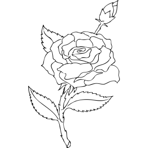 Rose and Rosebud coloring page