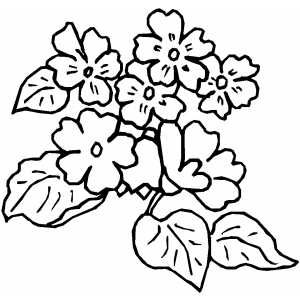 Seven Flowers coloring page