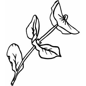 Straight Flower coloring page
