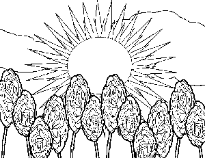 Sunny Rose Garden Coloring Page