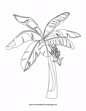 Tropical coloring page