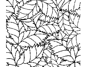Tropical Leaf Pattern Coloring Page