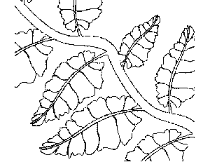 Vine with Leaves Coloring Page