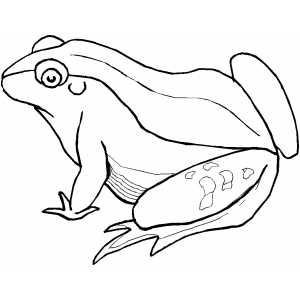 Big Green Frog coloring page