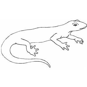 Calm Lizard coloring page