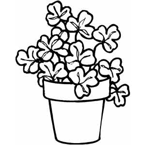 Shamrock Plant coloring page